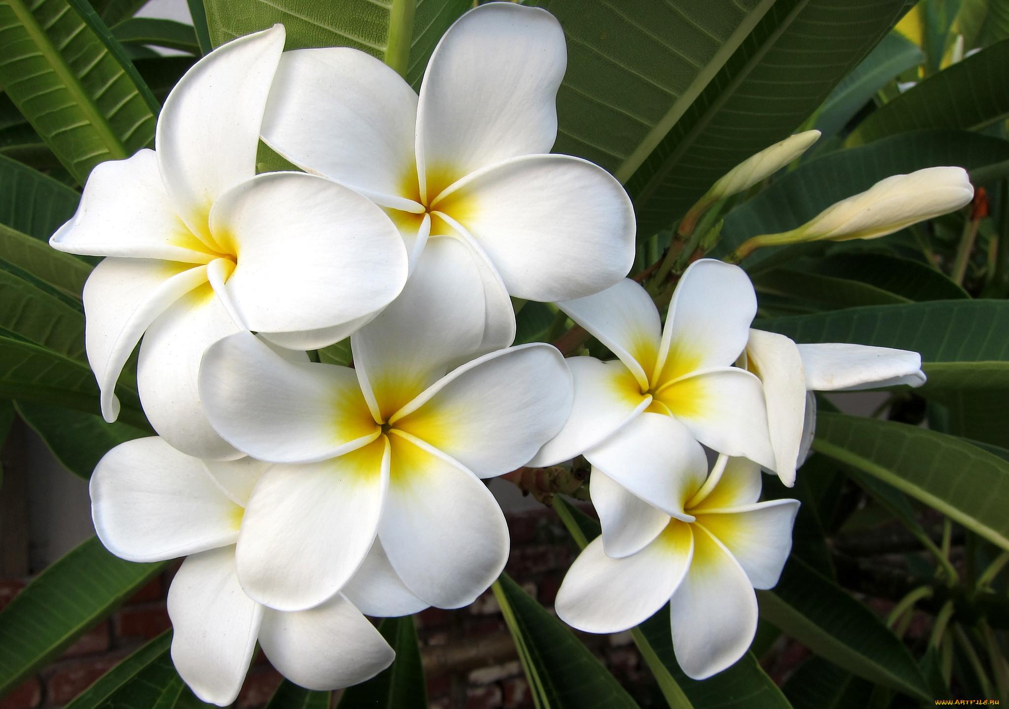 картинки красивых цветов названиями свадебных шишек напрямую